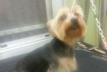 PELUQUERIA CANINA / Algunas mascotas que han pasado por nuestra peluqueria canina. #peluqueriacanina #cornella www.MiPeluqueriaCanina.es #mascotas                                   .        A que están guapos!