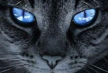 YEUX EXTRAORDINAIRES / Les yeux dans le monde animal, dont l'Homme fait partie