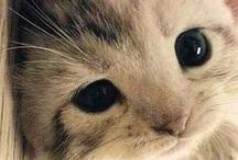 Cute animals / I love
