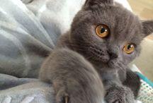 Blue / Super cute, fluffy little Blue