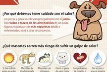 INFOGRAFIAS MASCOTAS / INFORMACION ÚTIL SOBRE MASCOTAS EN FORMATO GRAFICO. Perros, gatos, exoticos. Seleccionado desde el Centre Veterinari de Cornella. www.veterinario.es