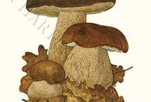 CHAMPIGNONS planches botaniques / Planches botaniques pour reconnaître les champignons