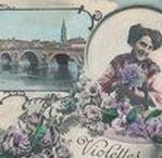 VIOLETTES de TOULOUSE / Toulouse, ville du Sud-Ouest de la France, grande productrice de violettes servant au parfum mais aussi aux bonbons