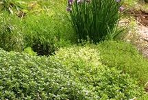 Down To Earth Herbs / Herb Gardens And Herb Containers.... As Well As Herb Care / by Raven M