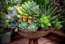 Contain Yourself / Indoor and outdoor container gardening ideas and inspiration, many of which are created by our own talented designers.
