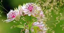 ART Inspiration - Nature, flowers, plants photos