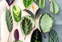 Indoor Gardening / Breathe easy... Boost your spirits and improve the quality of your indoor air with an assortment of beautiful, hard-working indoor plants.