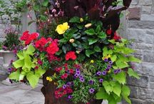 365 Days of Planters / Every type of container and planter