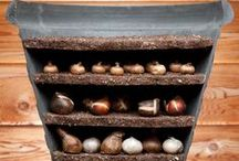 FALL for Bulbs / Buried treasures to plant in fall and enjoy next year.
