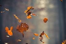 Fall Is In The Air / Autumnal Equinox .......Fall Related Things / by Raven M