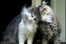 Katte (house cats)