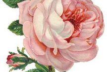 vintage picture flora