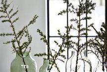 Secret life of plants