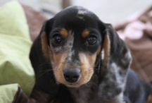 Foxie Doxies / by Michelle Unthank