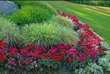 Garden & Backyard / Inspiration for Garden and Backyard