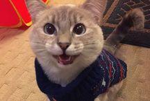 Crazy cat lady - AKA my future