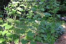 Vege garden