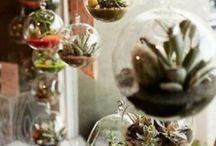All things green - Cacti and terrariums / #green #cactus #cacti #terrarium #ferns #moss #succulents
