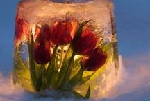 Holiday & Special Occasion / Gardening and flower related for special occasion inspirations throughout the year.