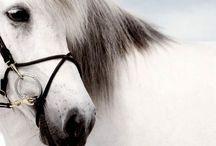 Horses... My Love / Paarden ❤️