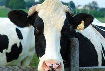 Kids ♥ Milk, Yogurt, Cheese! / FreshKids love Milk, Yogurt, Cheese!! We believe in a happy and healthy world for kids!