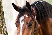 Paarden haar