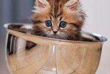 Chats / chats, chatons, cats