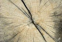 Patterns in Nature / Patterns and abstract designs in nature
