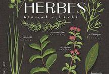 Hempire - Plants Reference