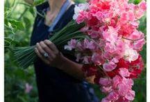 allotment gardening inspiration / moestuin volkstuin inspiratie / Inspiration for my vegetable plot, allotment gardening, first year 2016 / Ideeën voor mijn moestuin in volkstuinencomplex, eerste jaar 2016