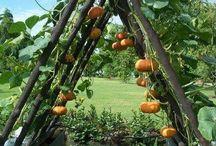 Garden delights / Recycling. DIY Garden ideas. Planting ideas. Permaculture,forest Garden