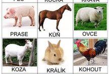 zvířata / kreslená zvířata a jejich mláďata