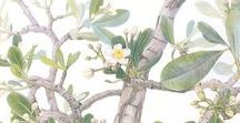 Margherita Leoni / She makes her watercolours just en plein air. She is a young and clever botanical artist, who is able to handle scientific aims and artistic beauty. She is one of the contemporary botanical artists who has improved this historical genre.