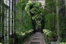 Verandas and greenhouses / Green interiors