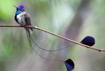 Wonderful Nature: birds / Pictures of birds