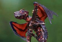 Wonderful Nature: amphibians & reptiles