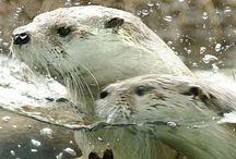 Wonderful Nature: water animals
