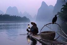 Традиционная китайская рыбалка с бакланами на реке Ли.