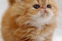 Cat, I'm a Kitty Cat / by Hannah Vietor