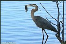 Watch the birdie / by Katherine Tompkins