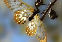 Butterflies,  winged Beauty.