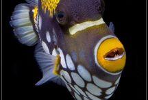 Fantastic Fish.