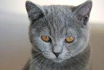 kitty, kitty <3