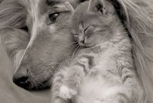 láska / Zvířata mají lásku