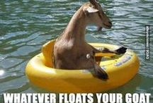 Captions  Meme  Humor / All about the funny captions and just good humor!