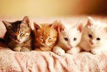 Cute stuff! ♥