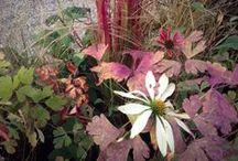 My Project - Sole Paradisi Design your garden / ...dal progetto alla materia che prende vita