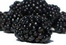 Frukttrær og bærbusker / Fruits and berries, propagation and stuff