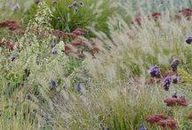 Trädgård av drömmar / Dream garden / Så här vill jag att det ska se ut nån dag!