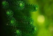 """Grün / """"A természet zöldje a növények és a fák élete. A ZÖLD maga az élet."""" (Naoki Higashida)"""